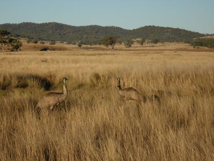 Some of the locals wandering around the property